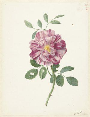 Botanic III