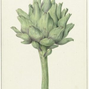 Botanic V