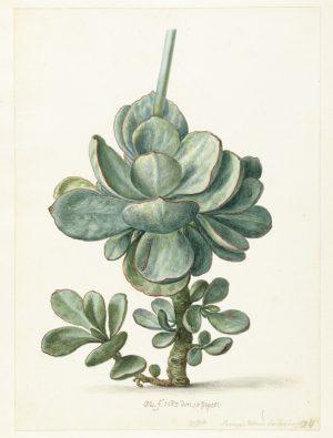 Botanic VI